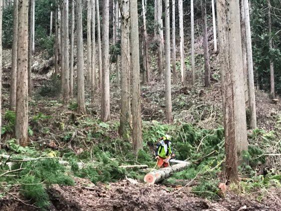 伐採写真 (2)