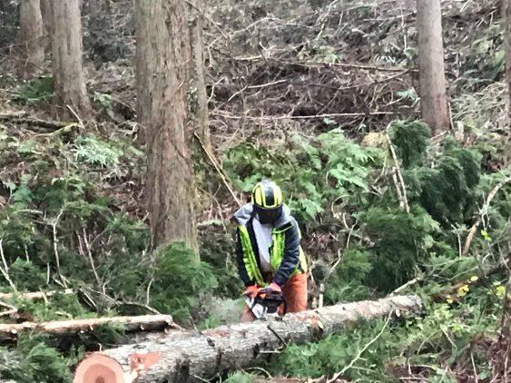 伐採写真 (3)