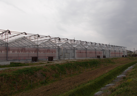 ハウス外観:太陽光利用型植物工場